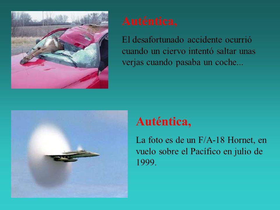 Auténtica, El desafortunado accidente ocurrió cuando un ciervo intentó saltar unas verjas cuando pasaba un coche... Auténtica, La foto es de un F/A-18