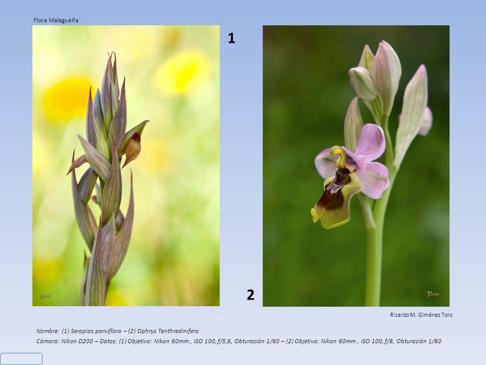 Nombre: Ophrys Lutea Cámara: Nikon D200 – Objetivo: Nikon 60mm - Datos: ISO 125, f/9, Obturación 1/400 Ricardo M.
