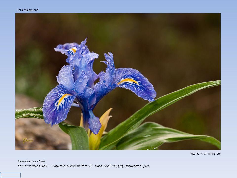 Nombre: Anacamptis Collina Cámara: Nikon D200 – Objetivo: Nikon 60mm - Datos: ISO 100, f/11, Obturación 1/30 Ricardo M. Giménez Toro Flora Malagueña