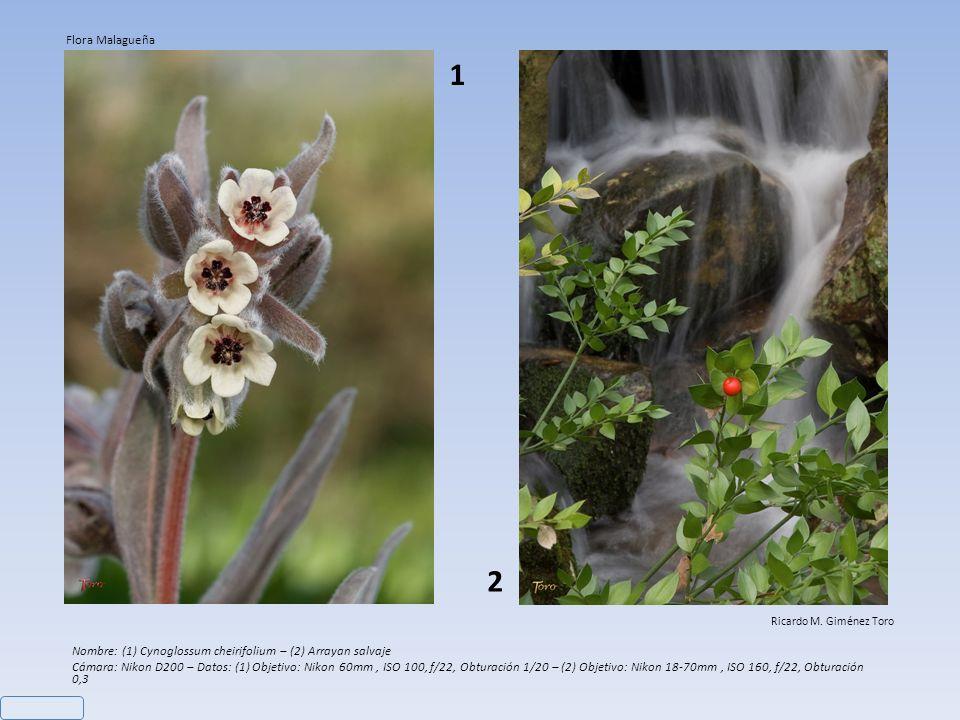 Nombre: Lirio Azul Cámara: Nikon D200 – Objetivo: Nikon 105mm VR - Datos: ISO 100, f/8, Obturación 1/60 Ricardo M. Giménez Toro Flora Malagueña