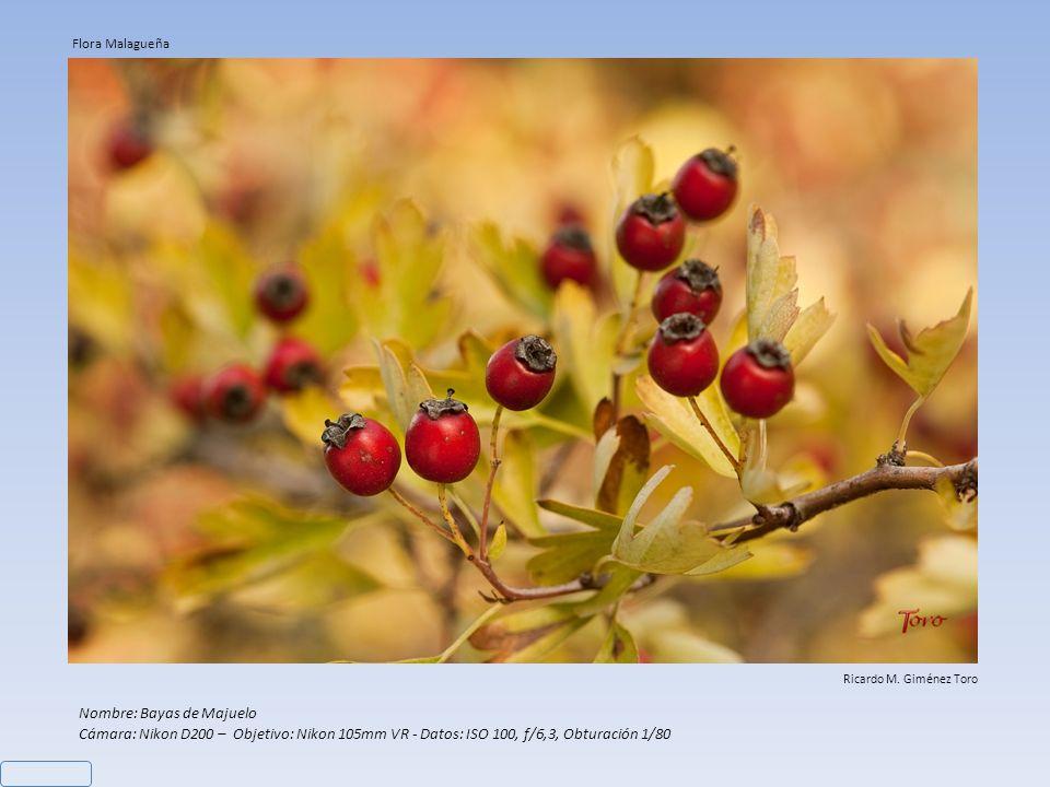 Nombre: (1) Cynoglossum cheirifolium – (2) Arrayan salvaje Cámara: Nikon D200 – Datos: (1) Objetivo: Nikon 60mm, ISO 100, f/22, Obturación 1/20 – (2)