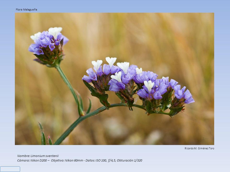 Nombre: (1) Asparagus officinalis – (2) Narciso Cámara: Nikon D200 – Datos: (1) Objetivo: Nikon 60mm, ISO 100, f/8, Obturación 1/40 – (2) Objetivo: Ni