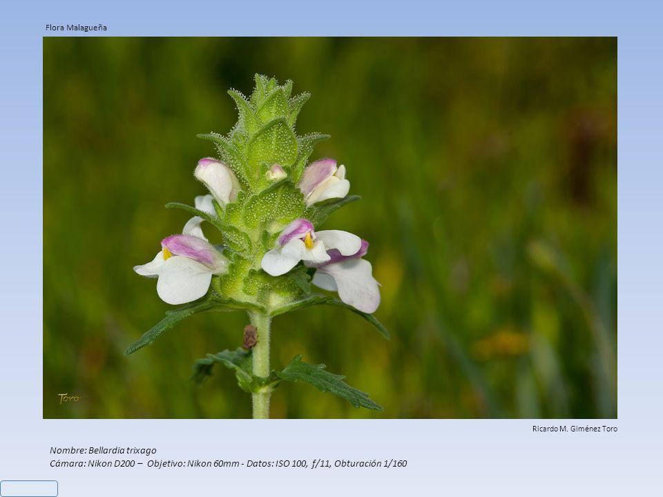 Nombre: Limonium sventenii Cámara: Nikon D200 – Objetivo: Nikon 60mm - Datos: ISO 100, f/4,5, Obturación 1/320 Ricardo M. Giménez Toro Flora Malagueña