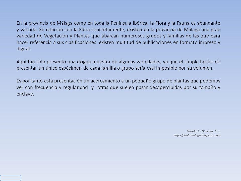 Nombre: (1) Serapias parviflora – (2) Ophrys Tenthredinifera Cámara: Nikon D200 – Datos: (1) Objetivo: Nikon 60mm, ISO 100, f/5,6, Obturación 1/60 – (2) Objetivo: Nikon 60mm, ISO 100, f/8, Obturación 1/60 Ricardo M.