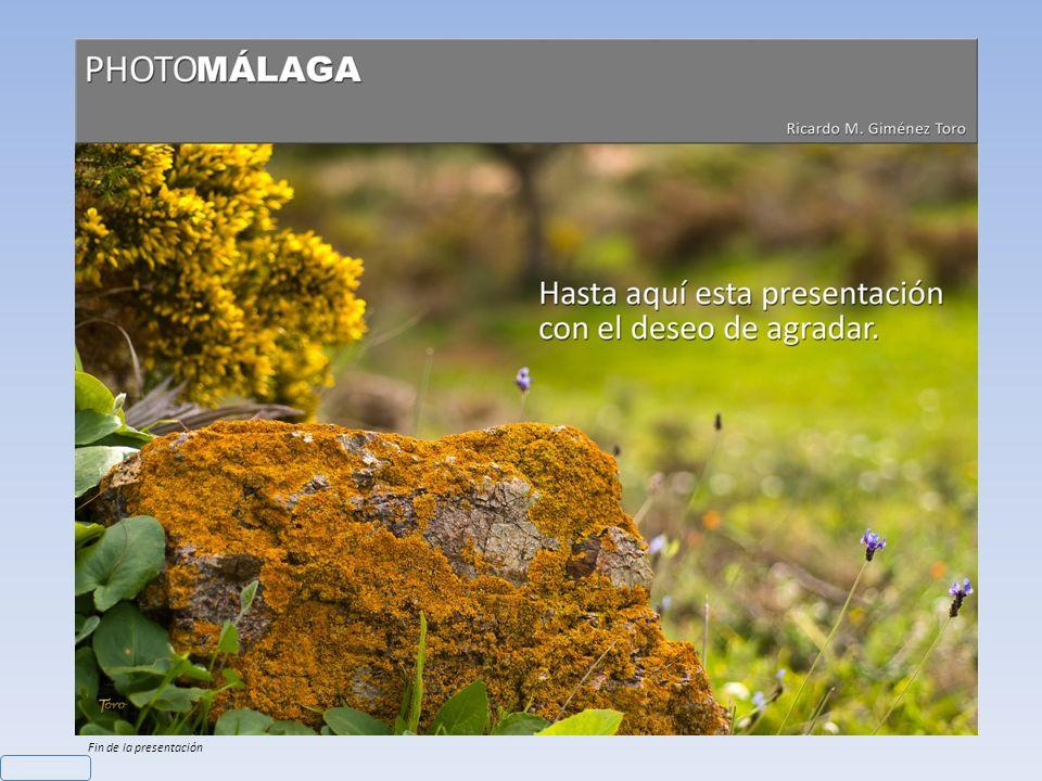 Nombre: Lino bravo Cámara: Nikon D200 – Objetivo: Nikon 60mm - Datos: ISO 100, f/11, Obturación 1/125 Ricardo M. Giménez Toro Flora Malagueña