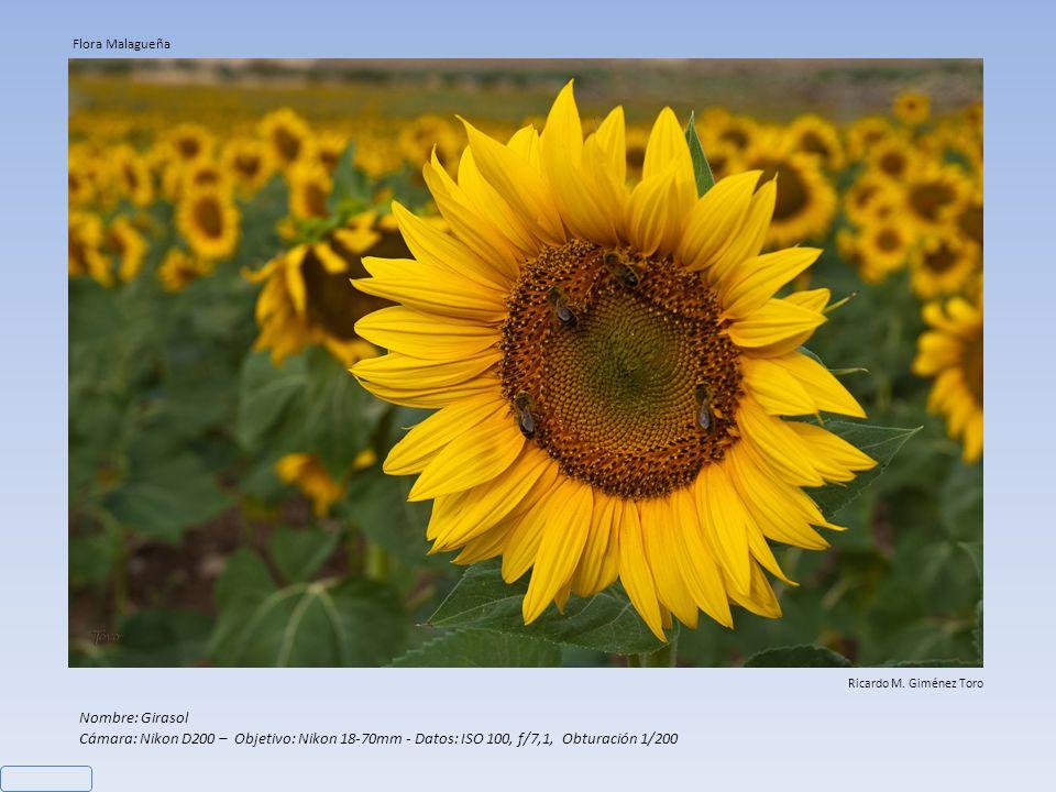 Nombre: Girasol Cámara: Nikon D200 – Objetivo: Nikon 18-70mm - Datos: ISO 100, f/7,1, Obturación 1/200 Ricardo M.