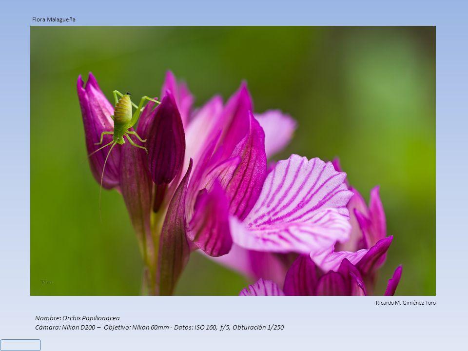 Nombre: Orchis Papilionacea Cámara: Nikon D200 – Objetivo: Nikon 60mm - Datos: ISO 160, f/5, Obturación 1/250 Ricardo M.
