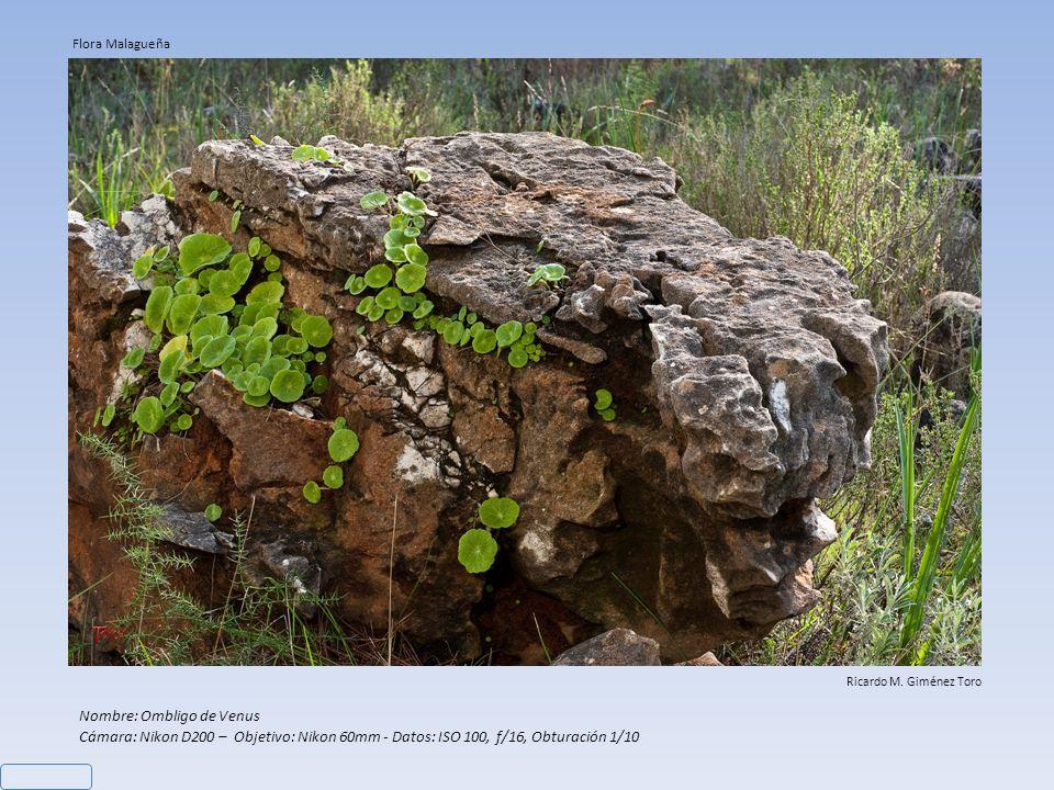 Nombre: Ombligo de Venus Cámara: Nikon D200 – Objetivo: Nikon 60mm - Datos: ISO 100, f/16, Obturación 1/10 Ricardo M.
