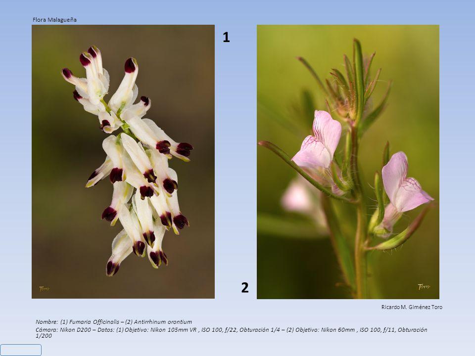 Nombre: Limonium sventenii Cámara: Nikon D200 – Objetivo: Nikon 60mm - Datos: ISO 100, f/4,5, Obturación 1/320 Ricardo M.