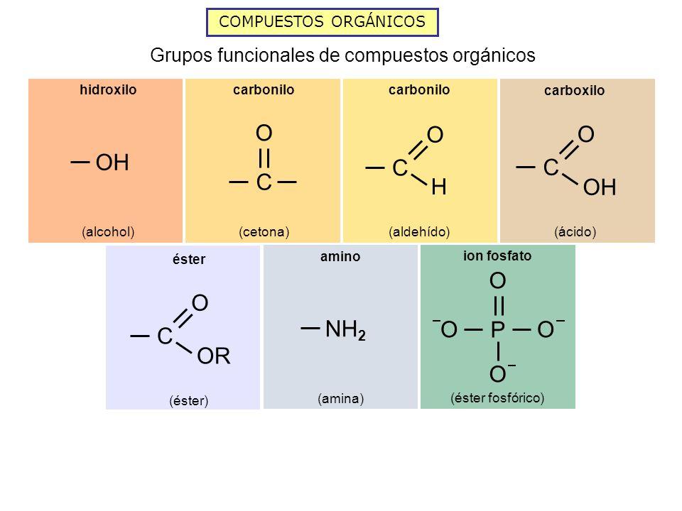 COMPUESTOS ORGÁNICOS Grupos funcionales de compuestos orgánicos P O OO O ion fosfato (éster fosfórico) NH 2 amino (amina) C O OR éster (éster) OH hidr