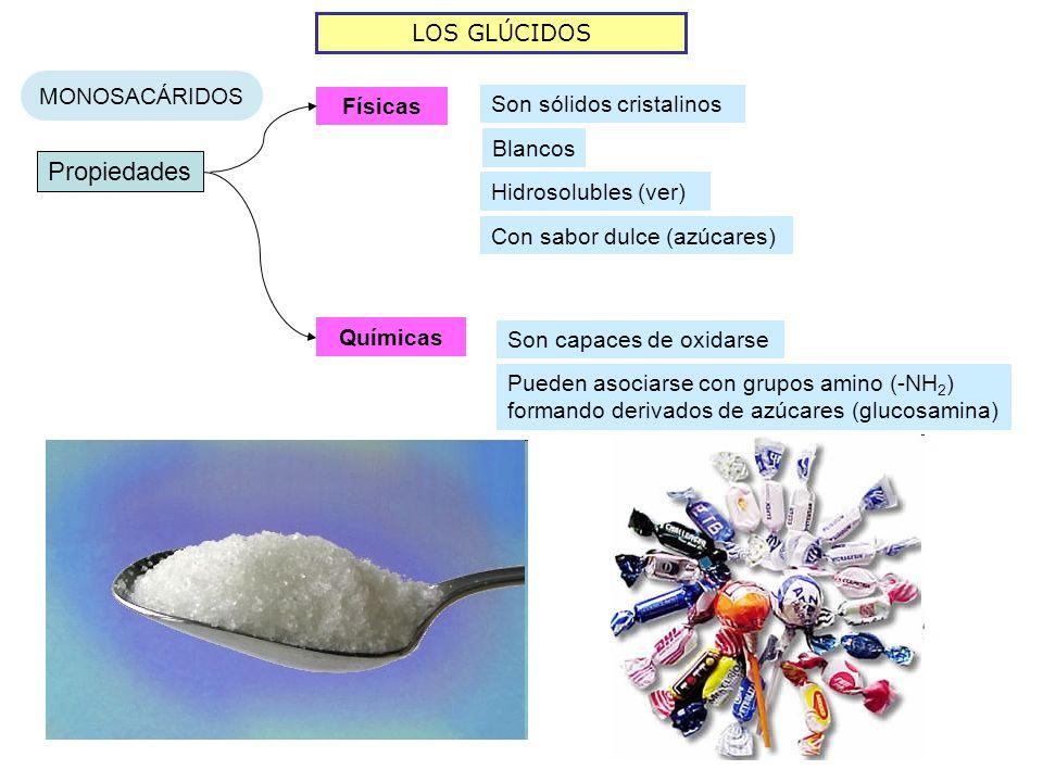 LOS GLÚCIDOS MONOSACÁRIDOS Propiedades Físicas Químicas Son sólidos cristalinos Son capaces de oxidarse Blancos Hidrosolubles (ver) Con sabor dulce (a
