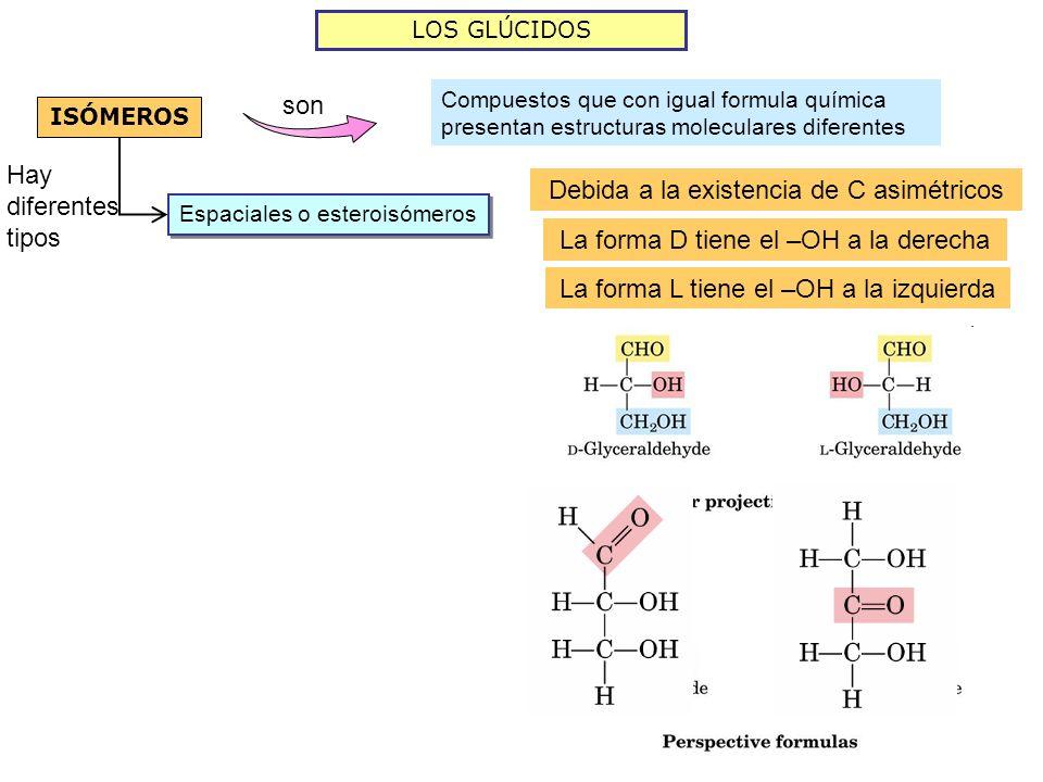 LOS GLÚCIDOS ISÓMEROS son Compuestos que con igual formula química presentan estructuras moleculares diferentes Espaciales o esteroisómeros Hay difere