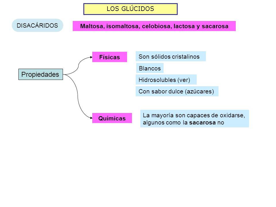 LOS GLÚCIDOS DISACÁRIDOS Maltosa, isomaltosa, celobiosa, lactosa y sacarosa Propiedades Físicas Químicas Son sólidos cristalinos La mayoría son capace