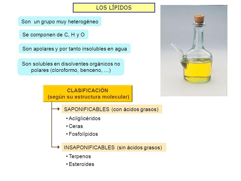 LOS LÍPIDOS Son un grupo muy heterogéneo Se componen de C, H y O Son apolares y por tanto insolubles en agua Son solubles en disolventes orgánicos no