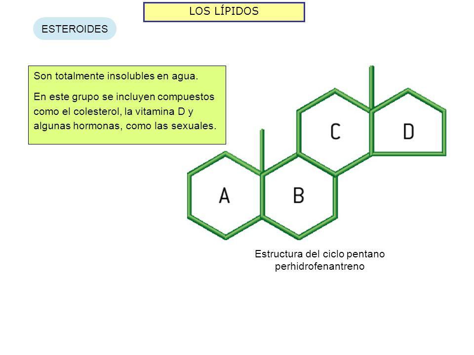 LOS LÍPIDOS ESTEROIDES Son totalmente insolubles en agua. En este grupo se incluyen compuestos como el colesterol, la vitamina D y algunas hormonas, c