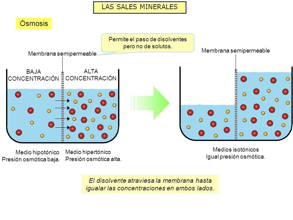 LAS SALES MINERALES Ósmosis Medio hipotónico Presión osmótica baja. Medio hipertónico Presión osmótica alta. Medios isotónicos Igual presión osmótica.