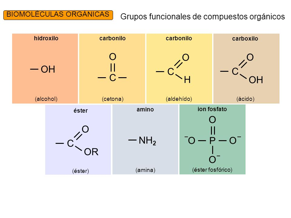 Grupos funcionales de compuestos orgánicos P O OO O ion fosfato (éster fosfórico) NH 2 amino (amina) C O OR éster (éster) OH hidroxilo (alcohol) C O carbonilo (cetona) C O H carbonilo (aldehído) C O OH carboxilo (ácido) BIOMOLÉCULAS ORGÁNICAS