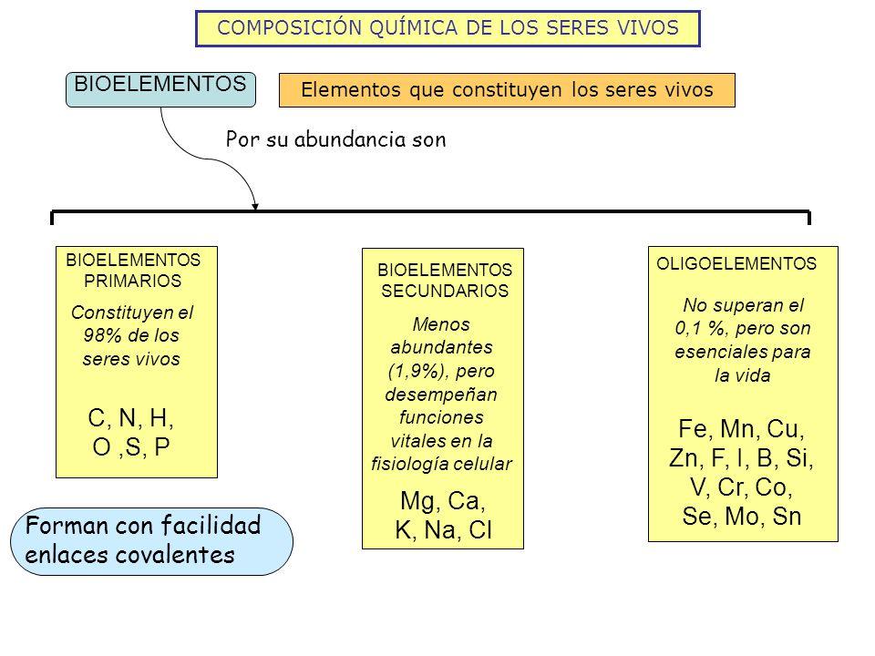 COMPOSICIÓN QUÍMICA DE LOS SERES VIVOS BIOELEMENTOS Elementos que constituyen los seres vivos Por su abundancia son BIOELEMENTOS PRIMARIOS Constituyen el 98% de los seres vivos C, N, H, O,S, P Forman con facilidad enlaces covalentes BIOELEMENTOS SECUNDARIOS Menos abundantes (1,9%), pero desempeñan funciones vitales en la fisiología celular Mg, Ca, K, Na, Cl OLIGOELEMENTOS No superan el 0,1 %, pero son esenciales para la vida Fe, Mn, Cu, Zn, F, I, B, Si, V, Cr, Co, Se, Mo, Sn