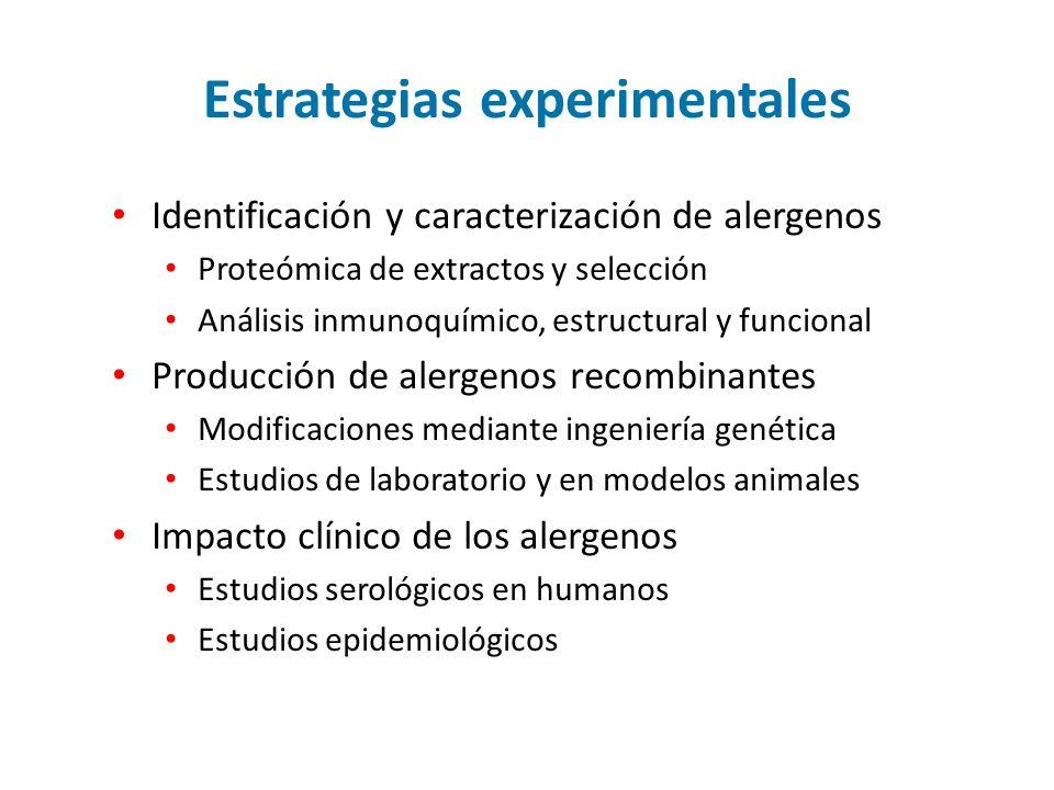 Estrategias experimentales Identificación y caracterización de alergenos Proteómica de extractos y selección Análisis inmunoquímico, estructural y funcional Producción de alergenos recombinantes Modificaciones mediante ingeniería genética Estudios de laboratorio y en modelos animales Impacto clínico de los alergenos Estudios serológicos en humanos Estudios epidemiológicos