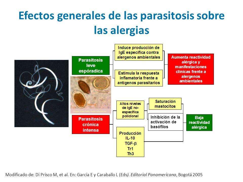 Inhibición de la activación de basófilos Modificado de: Di Prisco M, et al. En: García E y Caraballo L (Eds). Editorial Panamericana, Bogotá 2005 Efec
