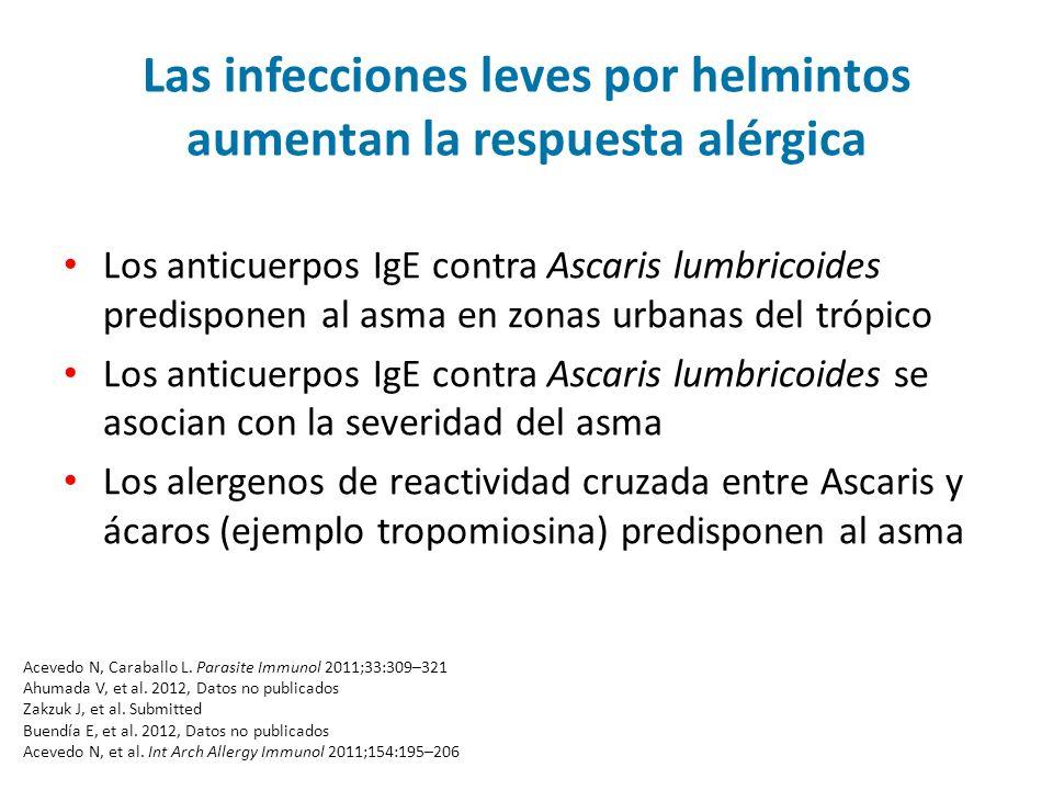 Las infecciones leves por helmintos aumentan la respuesta alérgica Los anticuerpos IgE contra Ascaris lumbricoides predisponen al asma en zonas urbanas del trópico Los anticuerpos IgE contra Ascaris lumbricoides se asocian con la severidad del asma Los alergenos de reactividad cruzada entre Ascaris y ácaros (ejemplo tropomiosina) predisponen al asma Acevedo N, Caraballo L.