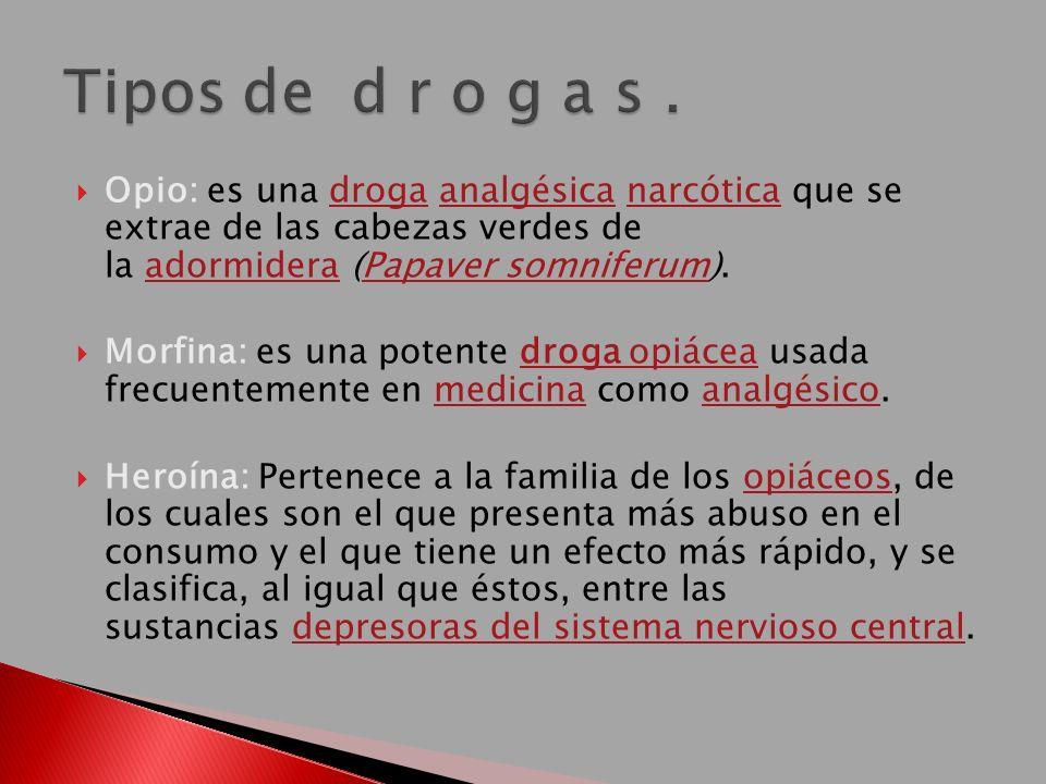 Opio: es una droga analgésica narcótica que se extrae de las cabezas verdes de la adormidera (Papaver somniferum).