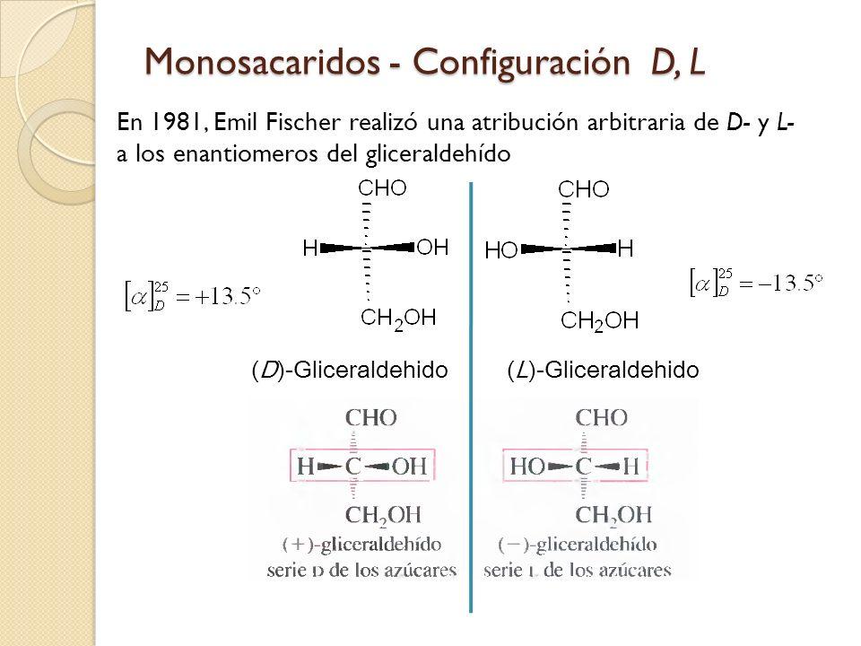 Monosacaridos - Configuración D, L En 1981, Emil Fischer realizó una atribución arbitraria de D- y L- a los enantiomeros del gliceraldehído (D)-Gliceraldehido(L)-Gliceraldehido