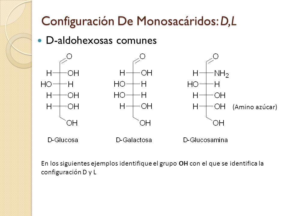 D-aldohexosas comunes (Amino azúcar) Configuración De Monosacáridos: D,L En los siguientes ejemplos identifique el grupo OH con el que se identifica la configuración D y L