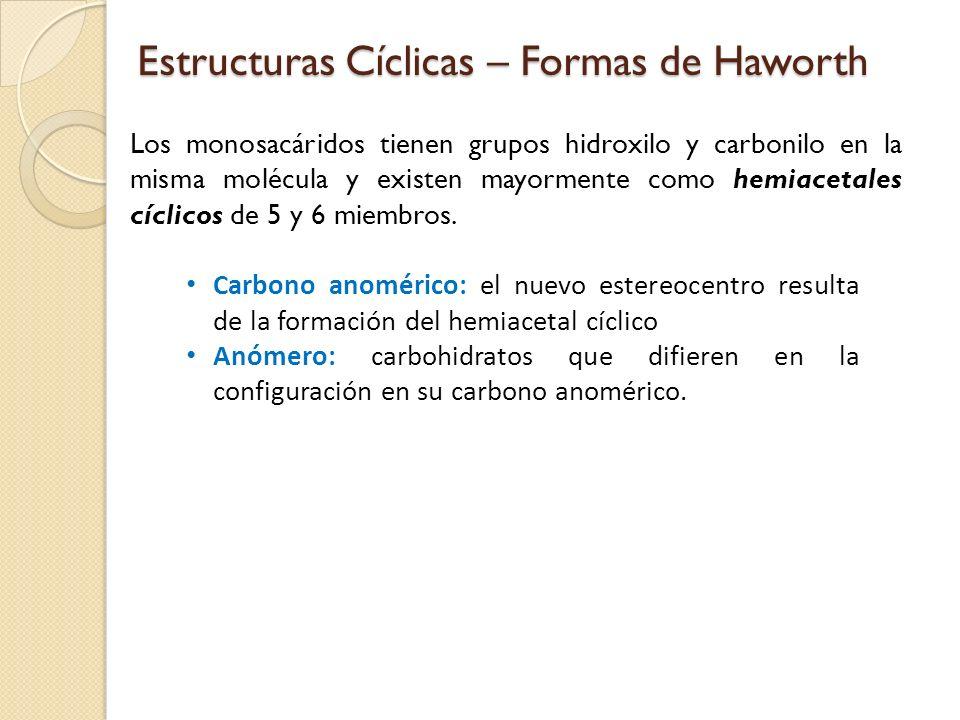 Estructuras Cíclicas – Formas de Haworth Los monosacáridos tienen grupos hidroxilo y carbonilo en la misma molécula y existen mayormente como hemiacetales cíclicos de 5 y 6 miembros.