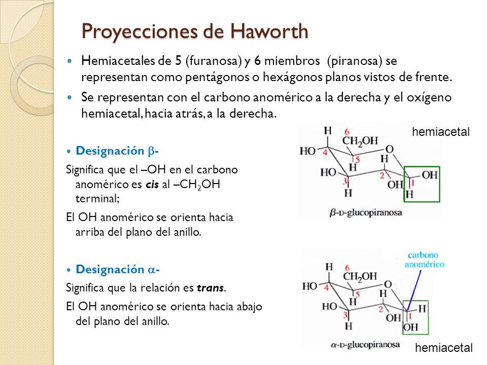Proyecciones de Haworth Hemiacetales de 5 (furanosa) y 6 miembros (piranosa) se representan como pentágonos o hexágonos planos vistos de frente. Se re