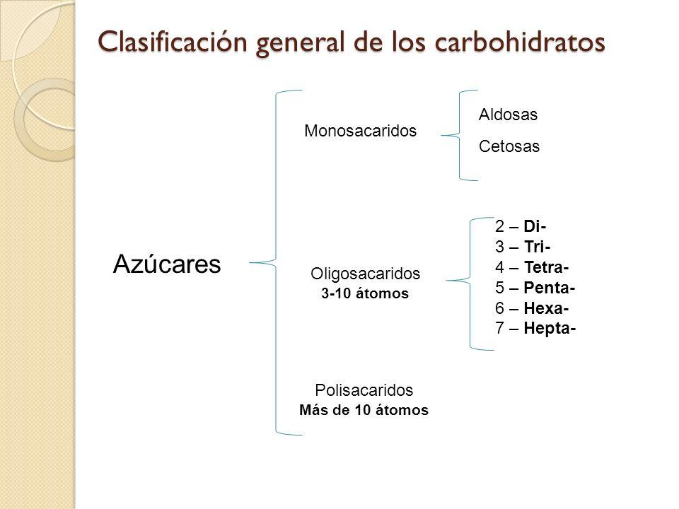 Clasificación general de los carbohidratos Monosacaridos Oligosacaridos 3-10 átomos Polisacaridos Más de 10 átomos Aldosas Cetosas Azúcares 2 – Di- 3 – Tri- 4 – Tetra- 5 – Penta- 6 – Hexa- 7 – Hepta-