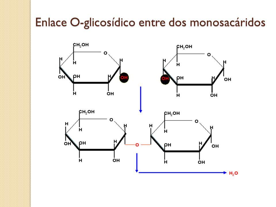 Enlace O-glicosídico entre dos monosacáridos