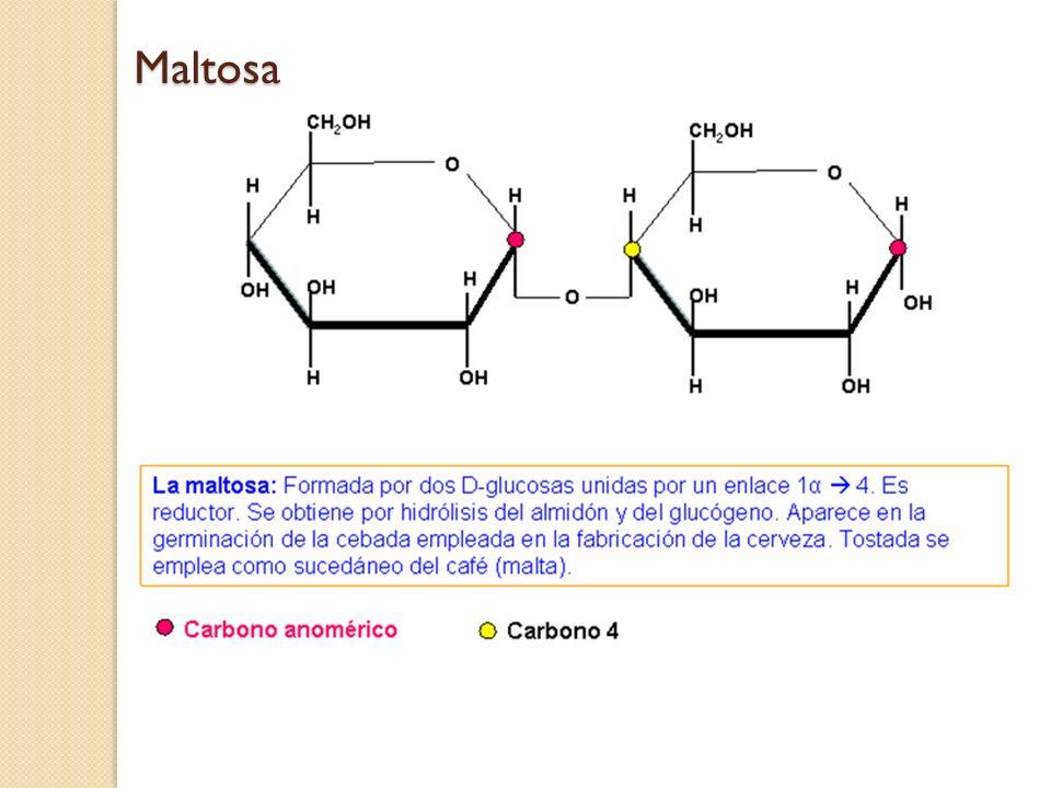 Maltosa