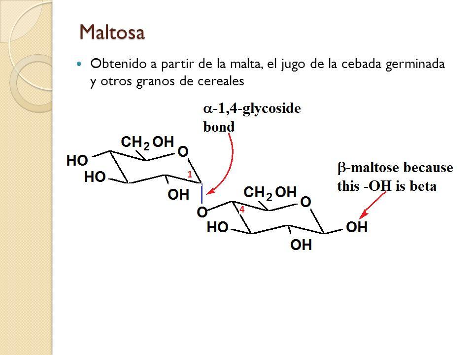 Maltosa Obtenido a partir de la malta, el jugo de la cebada germinada y otros granos de cereales