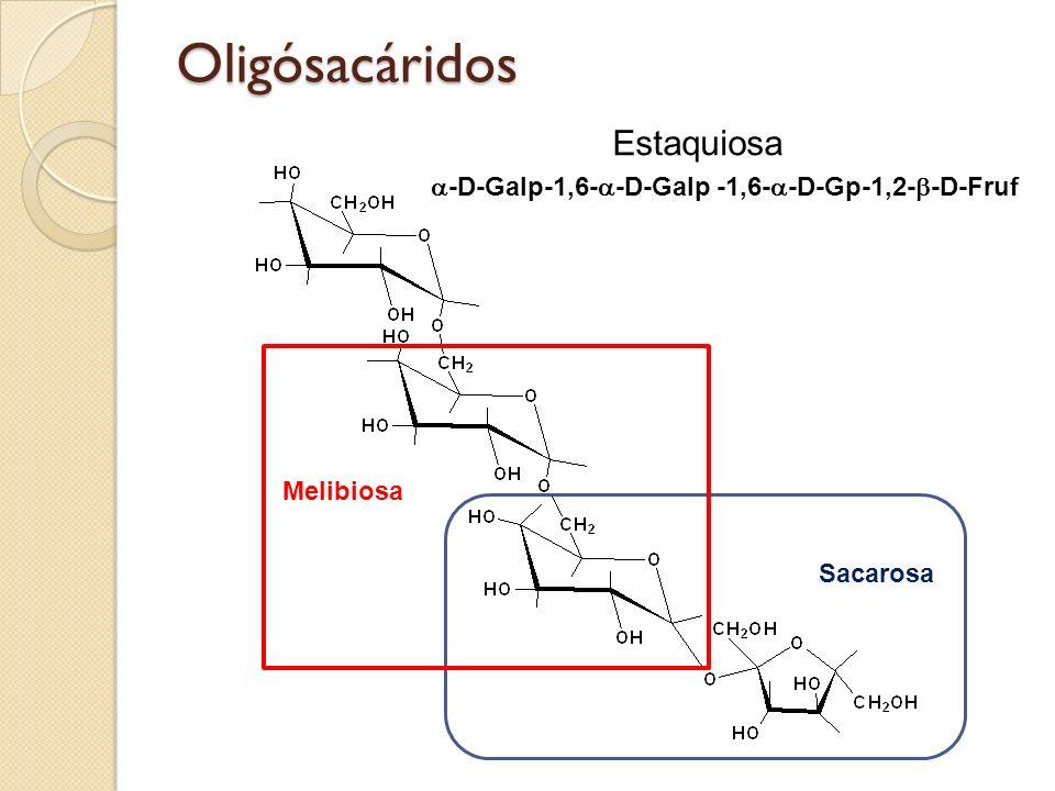 Oligósacáridos Sacarosa -D-Galp-1,6- -D-Galp -1,6- -D-Gp-1,2- -D-Fruf Melibiosa Estaquiosa