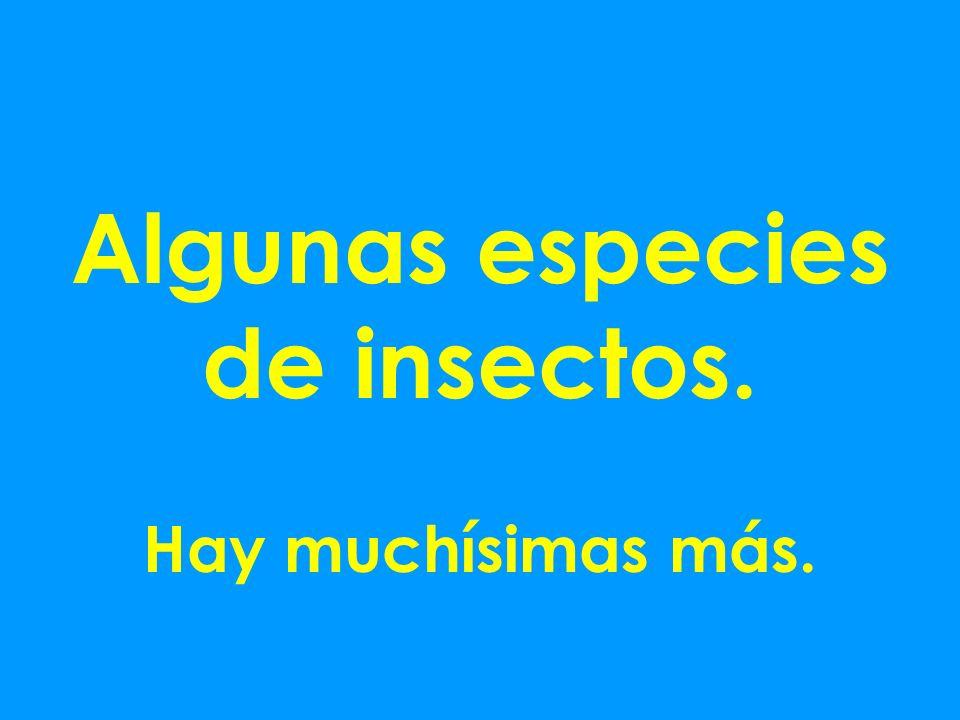 Algunas especies de insectos. Hay muchísimas más.