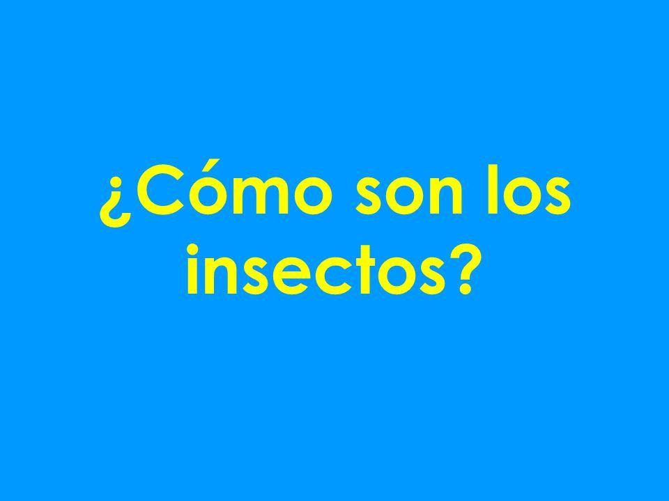 ¿Cómo son los insectos?