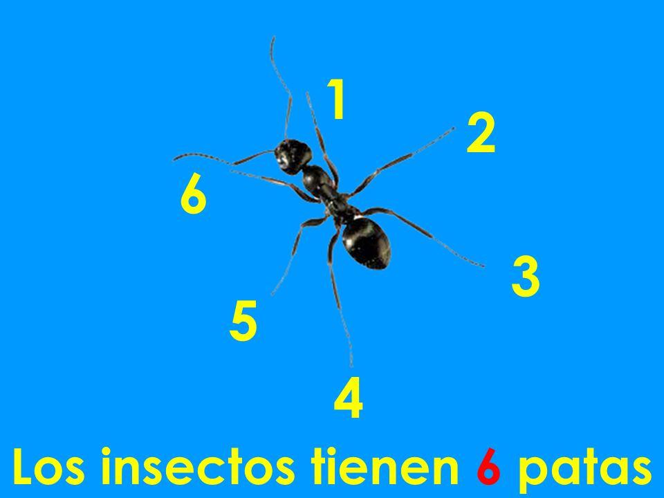 Los insectos tienen 6 patas 1 2 3 4 5 6