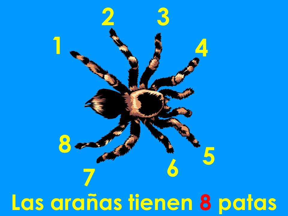 Las arañas tienen 8 patas 1 23 4 5 6 8 7