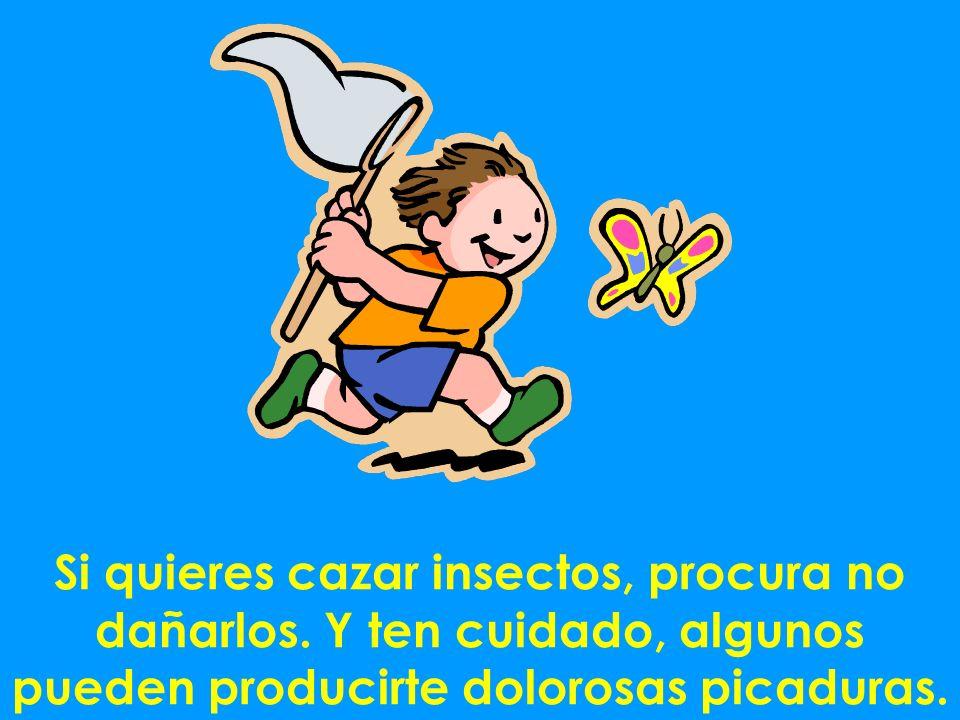 Si quieres cazar insectos, procura no dañarlos. Y ten cuidado, algunos pueden producirte dolorosas picaduras.