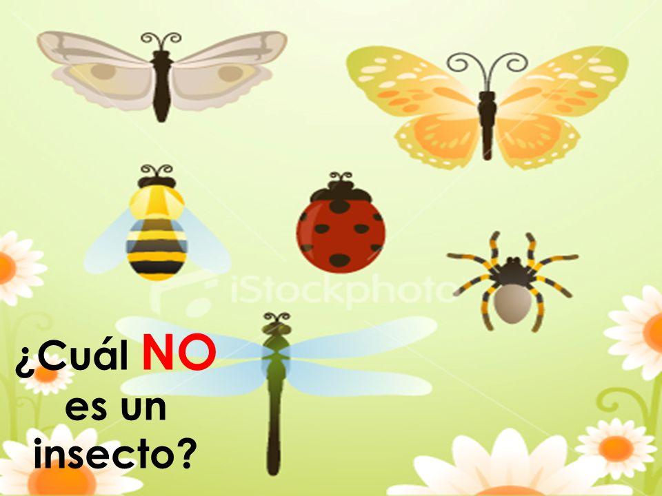 ¿Cuál NO es un insecto?
