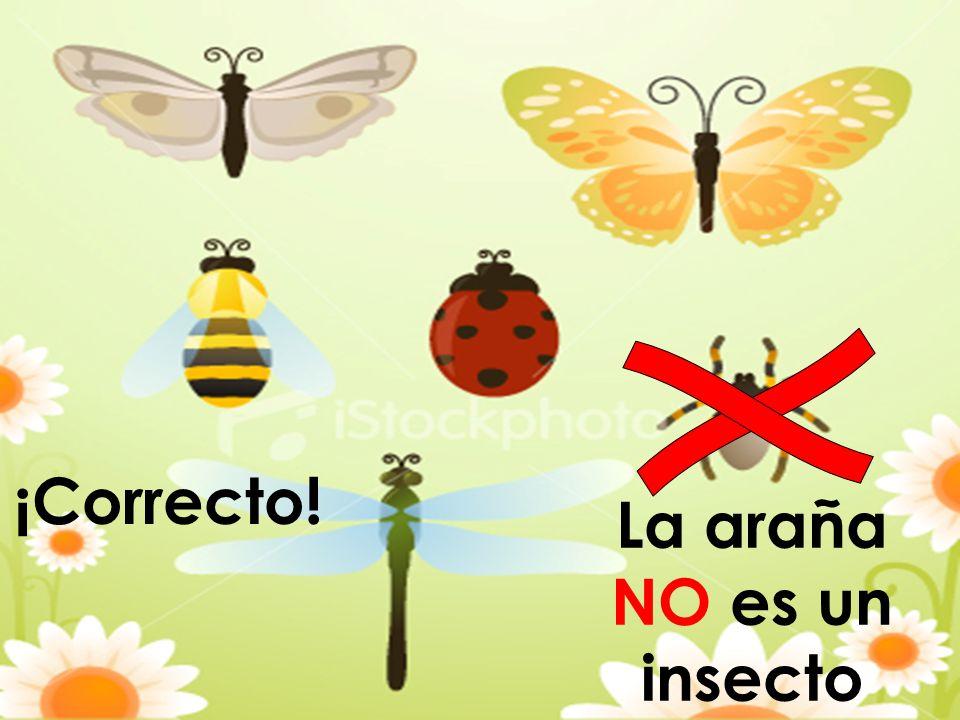 ¡Correcto! La araña NO es un insecto
