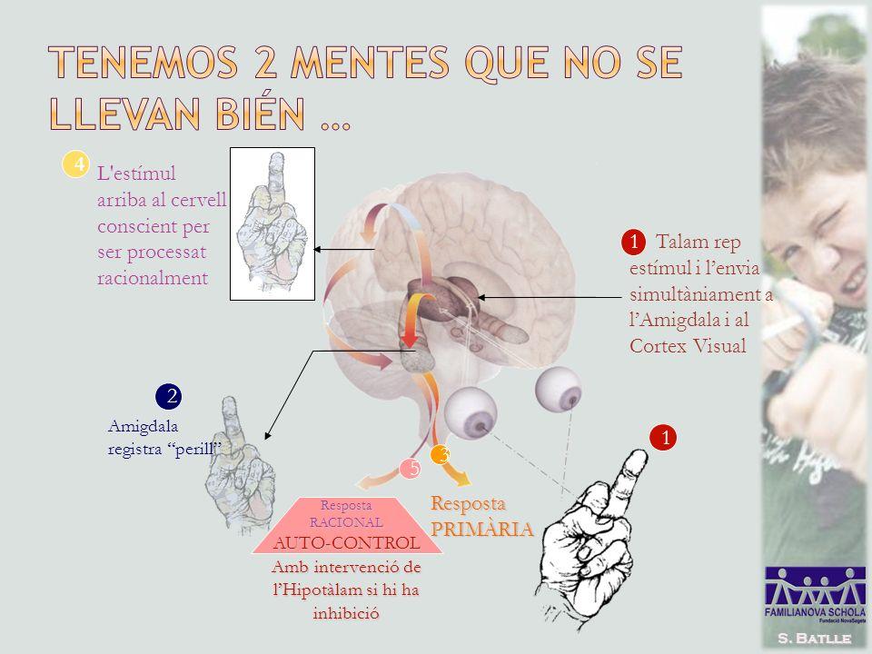 1 Talam rep estímul i lenvia simultàniament a lAmigdala i al Cortex Visual 1 2 Amigdala registra perill 3 RespostaPRIMÀRIA 4 L estímul arriba al cervell conscient per ser processat racionalment 5 RespostaRACIONALAUTO-CONTROL Amb intervenció de lHipotàlam si hi ha inhibició