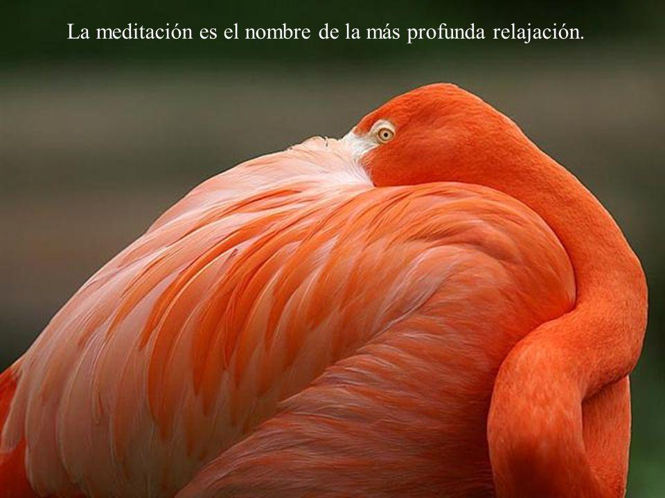 Insistiendo en la relajación,llega a aparecer la meditación.