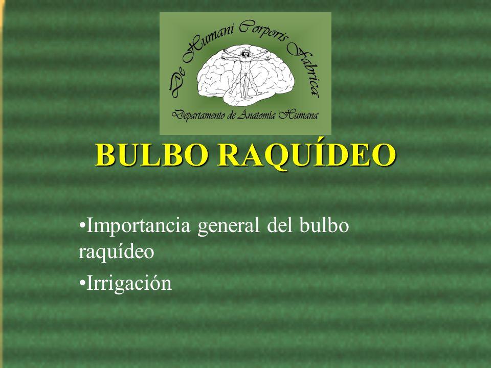 BULBO RAQUÍDEO Importancia general del bulbo raquídeo Irrigación