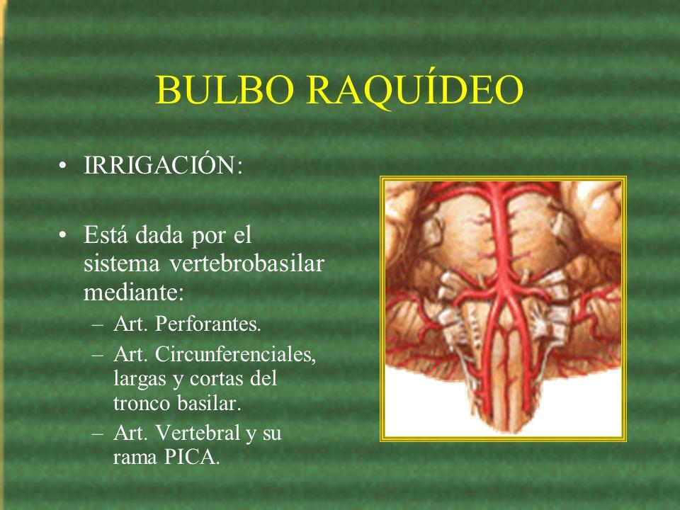 BULBO RAQUÍDEO IRRIGACIÓN: Está dada por el sistema vertebrobasilar mediante: –Art. Perforantes. –Art. Circunferenciales, largas y cortas del tronco b