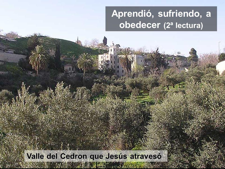 Muro oriental Hacía X siglos que el rey David huyó por la parte oriental de Jerusalén, cuando su hijo (Absalon) lo quería matar. Ahora Jesús entra por
