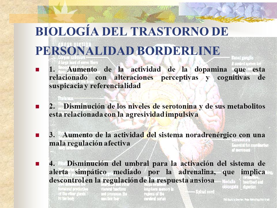 BIOLOGÍA DEL TRASTORNO DE PERSONALIDAD BORDERLINE 1. Aumento de la actividad de la dopamina que esta relacionado con alteraciones perceptivas y cognit