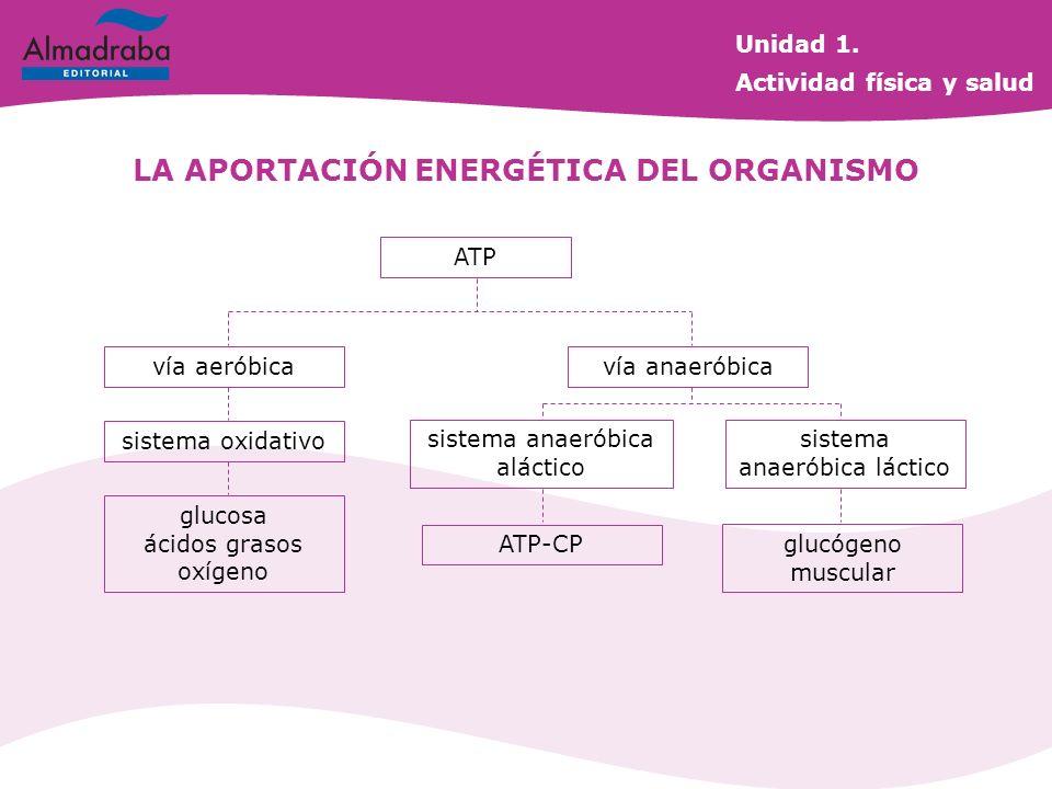 ATP vía aeróbicavía anaeróbica sistema oxidativo glucosa ácidos grasos oxígeno sistema anaeróbica aláctico sistema anaeróbica láctico ATP-CP glucógeno