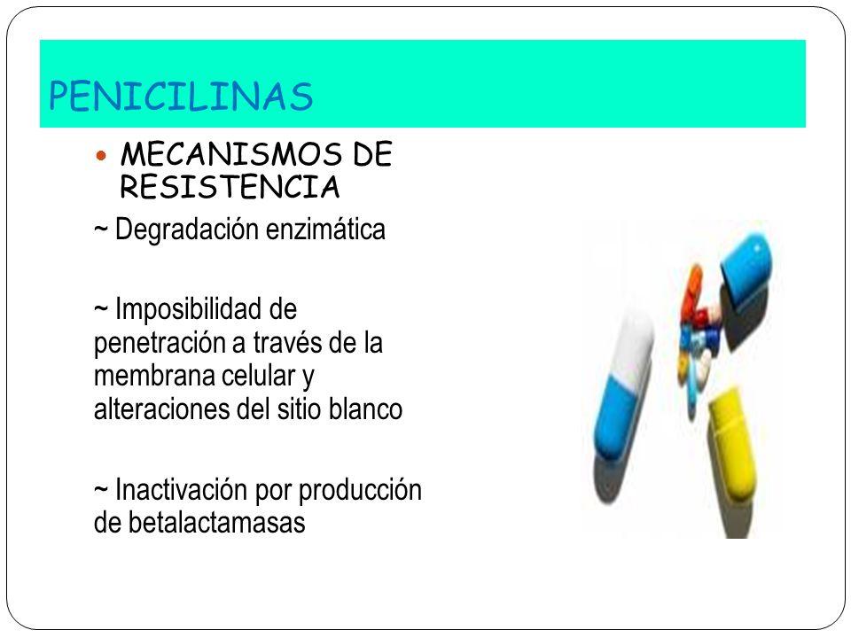 PENICILINAS MECANISMOS DE RESISTENCIA ~ Degradación enzimática ~ Imposibilidad de penetración a través de la membrana celular y alteraciones del sitio